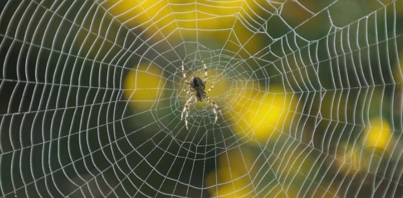 evdeki örümcekler için doğal yöntemler