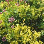 yaz bahçe çiçekleri