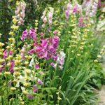 yaz için bahçe çiçekleri 2017