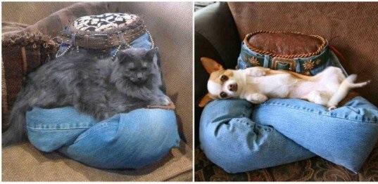köpek yatağı nasıl olmalı