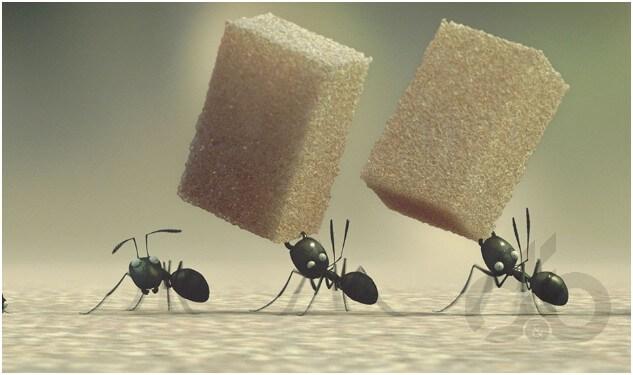 Evdeki Karıncalardan Kurtulmanın Doğal Yolları