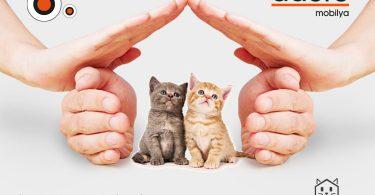 adore mobilya kedi evleri