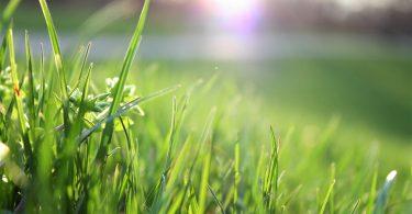 Çimler Neden Sararır? Neden Kurur? Tekrar Nasıl Yeşillendirilir?